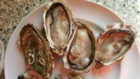 huîtres n° 2