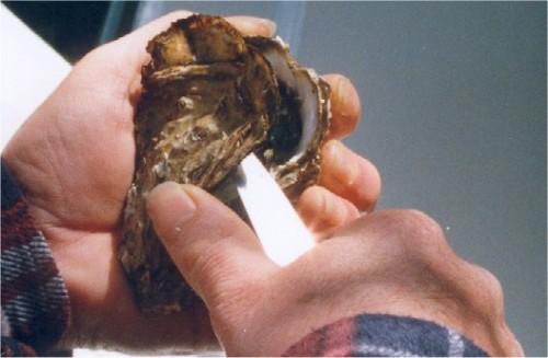 Ouverture d'une huître : sectionner le muscle