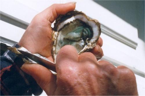 Ouverture d'une huître : forcer la charnière