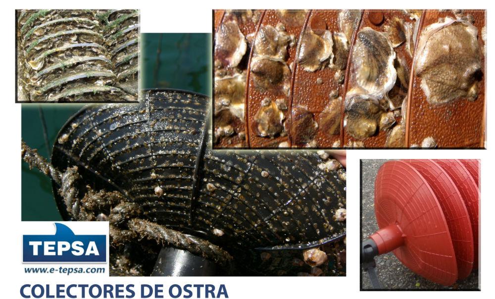 COLECTORES DE OSTRA