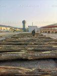 Poteaux moules de bouchot - mytiliculture